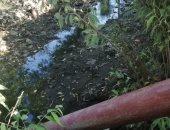 أهالى الصفا بالدقهلية يناشدون الرى بإعادة ضخ المياه للترعة لإنقاذ المزروعات