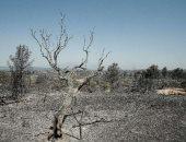 ماذا فعلت موجة الحر فى غابات إسبانيا؟