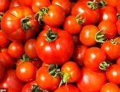 شعبة الخضروات: لا زيادة فى أسعار الطماطم وشائعات الارتفاع هدفها ضرب السوق