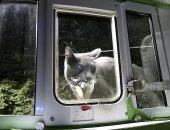 مهندس بأمازون يبتكر بابا ذكيا للقطط لمنع قطه من إحضار حيوانات ميتة للمنزل