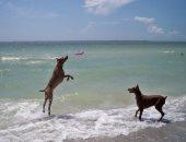 من حق الحيوانات تدلع ..شواطىء مخصصة للكلاب