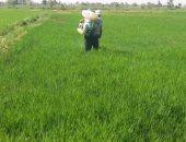 صور .. حملات لإزالة زراعات الأرز المخالفة بمحافظة الفيوم