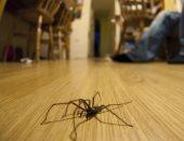 فى أقل من 5 دقائق.. تخلصى من العناكب فى منزلك باستخدام 4 طرق