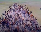 """شاهد.. آلاف الخيول يشاركون فى مهرجان """"نادام"""" الصينى"""