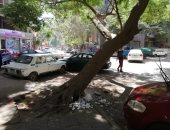 قارئ يحذر من سقوط شجرة بشارع الحسن بالدقى وتعرض حياة المواطنين للخطر