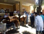 صور.. الكشف على 500 رأس ماشية ضمن قوافل جامعة أسيوط بالقرى الأكثر احتياجا