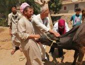 صور.. علاج 3 آلاف رأس ماشية خلال قافلة بيطرية بمركز منفلوط