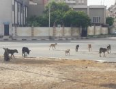 شكوى من انتشار الكلاب الضالة بمنطقة المريوطية فيصل