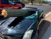 انكتبله عمر جديد.. سائق ينجو بأعجوبة بعد سقوط صبارة عملاقة داخل سيارته