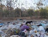 رفع 50 طن قمامة ومخلفات بالترع والشوارع خلال حملة نظافة بمركز القوصية