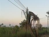 """اضبط مخالفة.. سقوط جذع نخلة على عمود كهرباء يهدد حياة أهالى """"العديسية"""" بقنا"""