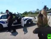 """شاهد.. الشرطة الأمريكية تنقذ """"غزال صغير"""" من مخاطر طريق سريع"""