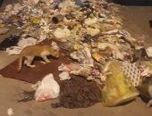 قارئ يشكو من انتشار القمامة بشارع نجاتى سراج بوسط القاهرة