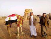 60 هجينا مصريا يشارك فى سباق ولى العهد بالسعودية