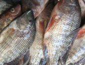 التموين: زيادة طرح الأسماك الطازجة بمنافذ المجمعات الاستهلاكية بنسبه 20%