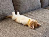 القطة Chata جميلة وبتنام زى الإنسان.. شوف صورها
