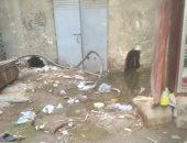 مياه الصرف الصحى تصل لكابلات الكهرباء فى المنيب