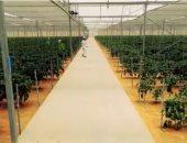 """""""الحياة اليوم"""" ينفرد بتغطية خاصة من مشروع """"الصوب الزراعية"""" بقاعدة محمد نجيب"""