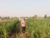 تدشين خطة للتوسع فى الحقول الإرشادية للمحاصيل الاقتصادية بالوادى الجديد