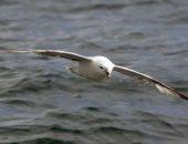 دراسة: 95% من الطيور البحرية النافقة تموت بسبب ابتلاع كميات من البلاستيك