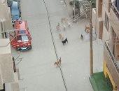 اضبط مخالفة.. الكلاب الضالة تحتل شوارع منطقة الفلل ببنها.. صور