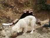 قمة الوفاء.. كلب ينتظر صاحبه المتوفى منذ 18 شهرًا في نفس مكان الحادث