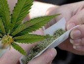 صحيفة: 43 ألف شخص مسجل لشراء الماريجوانا فى صيدليات أوروجواى منذ التقنين