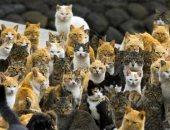 لو بتحب الحيوانات الأليفة عيش هناك..3 جزر يابانية بها قطط يفوق عدد سكانها