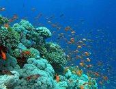 """شاهد.. شعاب """"كارلوس ريف"""" بالغردقة مقصد الأوربيين لمشاهدة الكهوف المرجانية"""