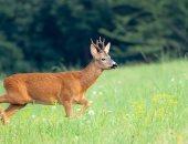 دراسة تكشف: الحيوانات لا يمكنها التكيف مع تغير المناخ