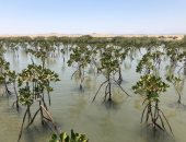 الأشجار سلاح.. إثيوبيا تواجه التغييرات المناخ بزراعة 353 مليون شجرة فى 12 ساعة
