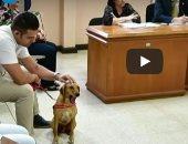 """صدق أو لا تصدق.. كلب """"يقاضى"""" صاحبه بسبب التعذيب فى أمريكا اللاتينية"""