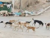 شكوى من انتشار الكلاب الضالة بقرية التمامة بالبحيرة