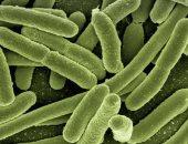 علماء يتوصلون إلى أدلة جديدة تكشف مراحل تطور البكتيريا