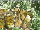 """""""الزراعة"""" تنشر لجان متخصصة لرصد أى حالات مرضية للنباتات خلال موسم الأمطار"""