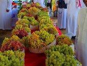 الأسواق الجديدة تنعش صادرات العنب وترفعها لـ100 ألف طن