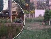 مطالب بتطوير حديقة ميدان الجمهوريات بالدقى بعد تحولها لمأوى للكلاب الضالة