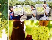 """""""الزراعة"""" تعلن ارتفاع صادرات العنب والجوافة لـ119 ألف طن واستمرار الشحن"""