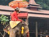 سياح أستراليون يطالبون بحذر ركوب الأفيال فى تايلاند .. اعرف السبب؟