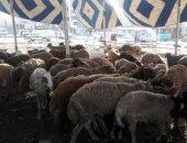 السودان: تصدير ٧٣٥ ألف و٤٥٣ رأس من الماشية الحية