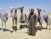صور.. المصرى الفائز بسباق هجن الرياض يستعد لخوض سباق ولى العهد بالطائف