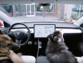 """تسلا تعمل على إصلاح خطأ فى """"وضع الحيوانات"""" الخاص بسيارتها الكهربائية"""