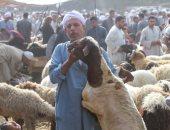 الزراعة تقدم روشتة لكيفية الذبح الشرعى لخروف العيد × 5 معلومات