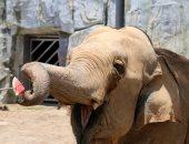 لمواجهة الطقس الحار.. حديقة حيوان صينية توزع الفواكه المثلجة على الحيوانات
