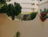 """صور ..قرود هاربة وسط مدينة أسوان.. و""""الطب البيطرى"""" يبحث عن مصدرها"""