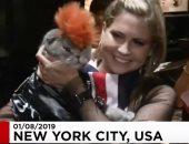 شاهد.. عرض أزياء القطط السنوى بنيويورك