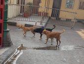 صور.. شكوى من انتشار الكلاب الضالة فى منطقة الحسين بالقاهرة
