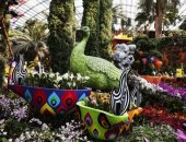 معرض الزهور الوطنية فى سنغافورة يخطف أعين الزوار