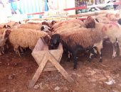 الزراعة: 28 مديرية تكثف حملاتها على شوادر وأماكن بيع الأضاحى