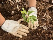 علماء كنديون يستعينون بالطائرات بدون طيار لزراعة مليار شجرة بحلول 2028